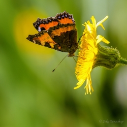 Butterfly nature photography