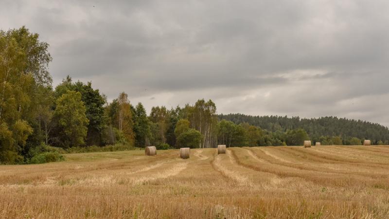 Het koren is van het veld