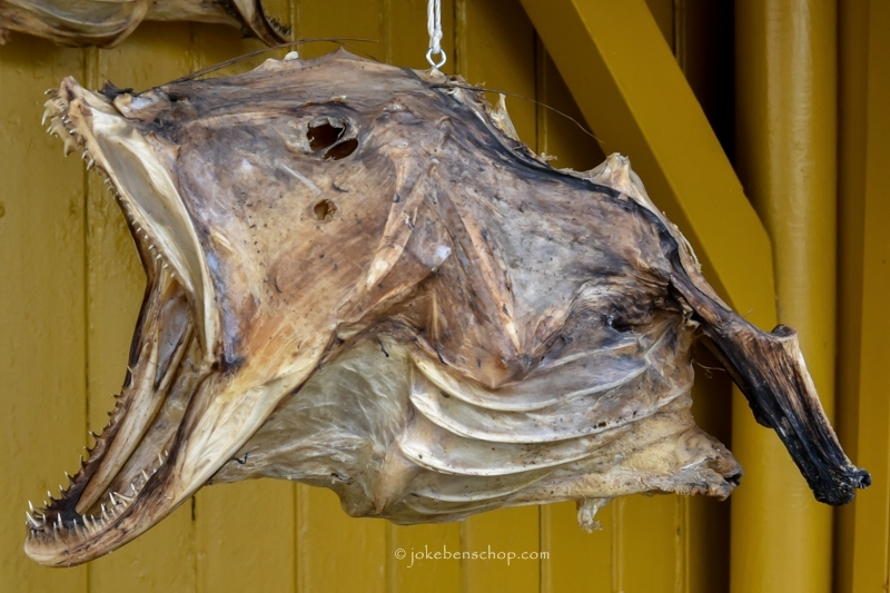 Gevaarlijke vis