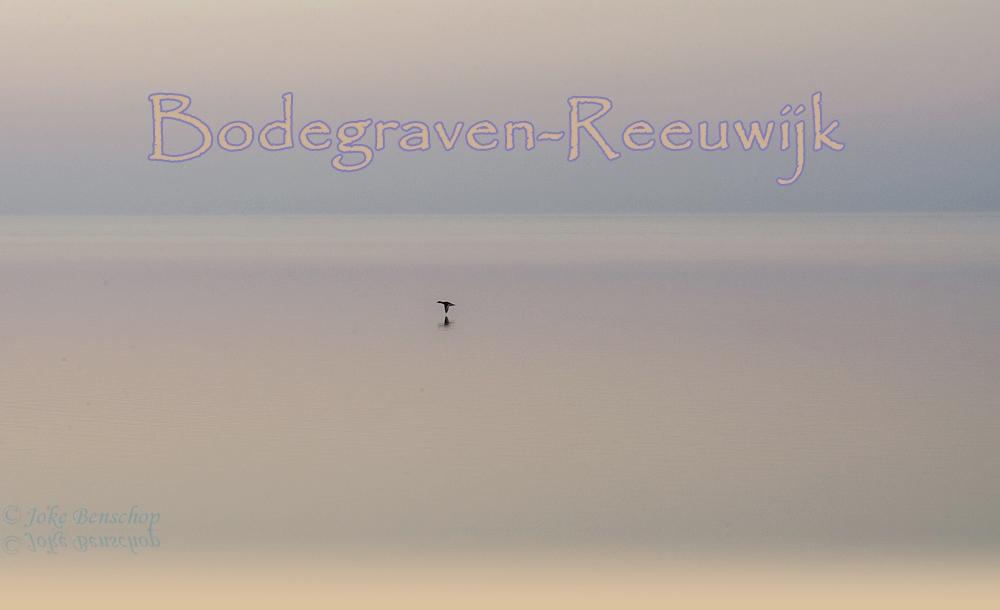 Fotograaf in Bodegraven-Reeuwijk