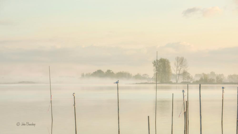's Gravenkoopse plas heel vroeg in Bodegraven-Reeuwijk