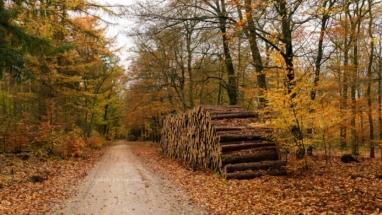 Herfst kleuren op de Veluwe