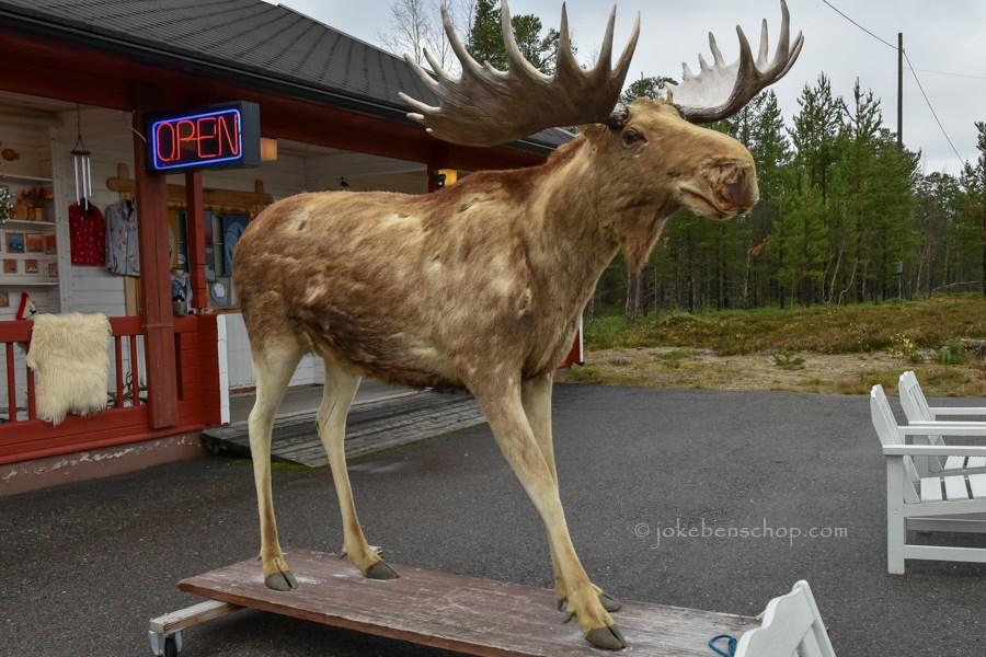 Rendier bij het Sami winkeltje