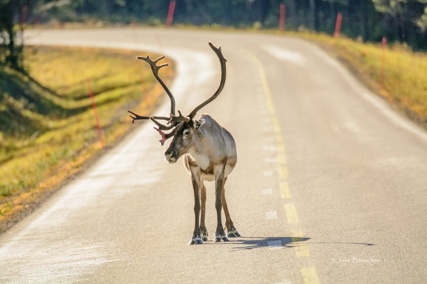 Rudolf the roadblock.