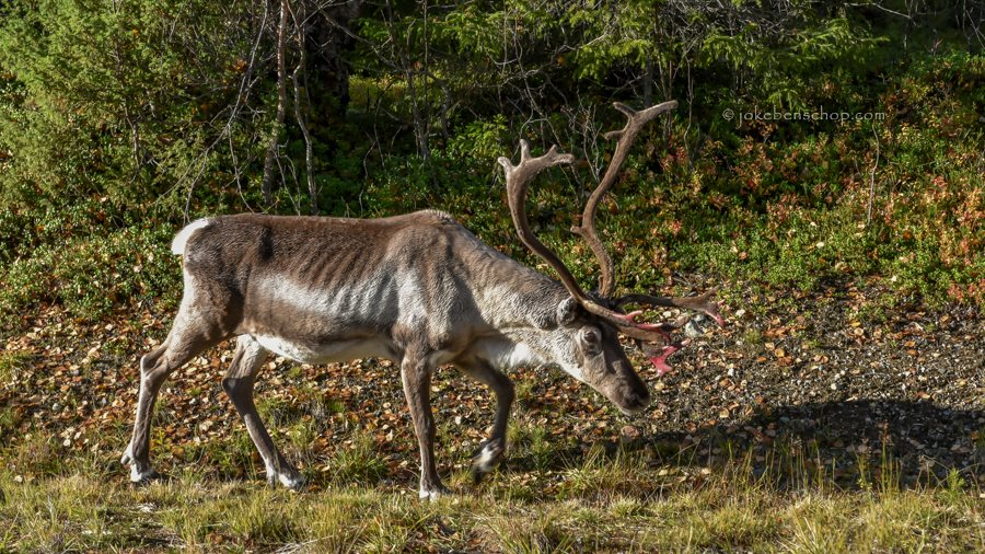 Rudolf gaat nukkig aan de kant