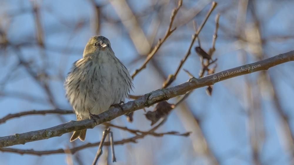 De vroege vogel