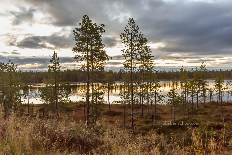 Ochtend in Lapland Zweden