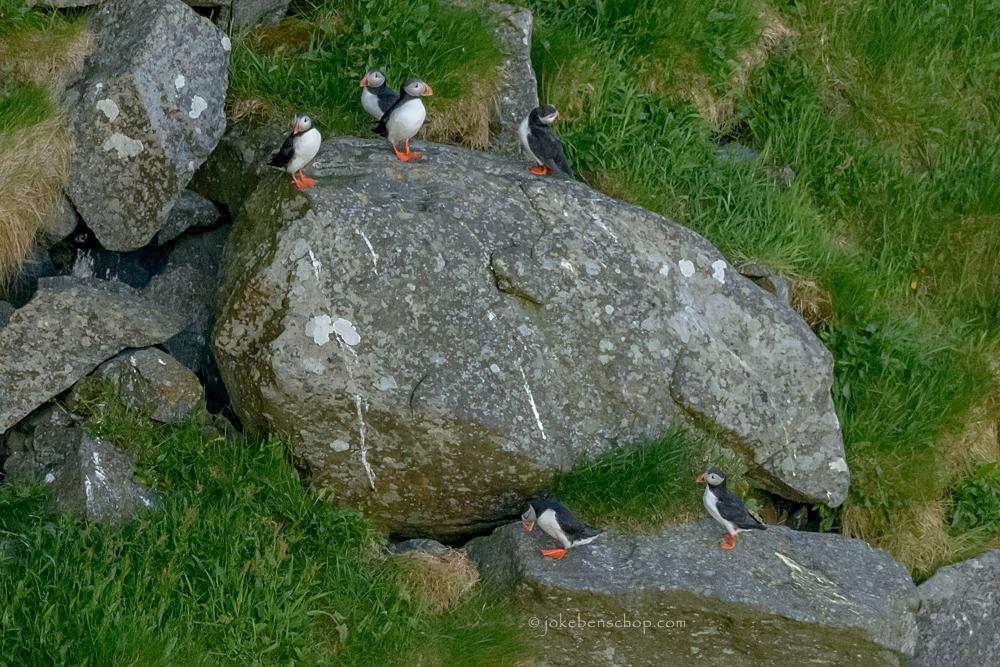 Groepje papegaaiduikers Runde Norway