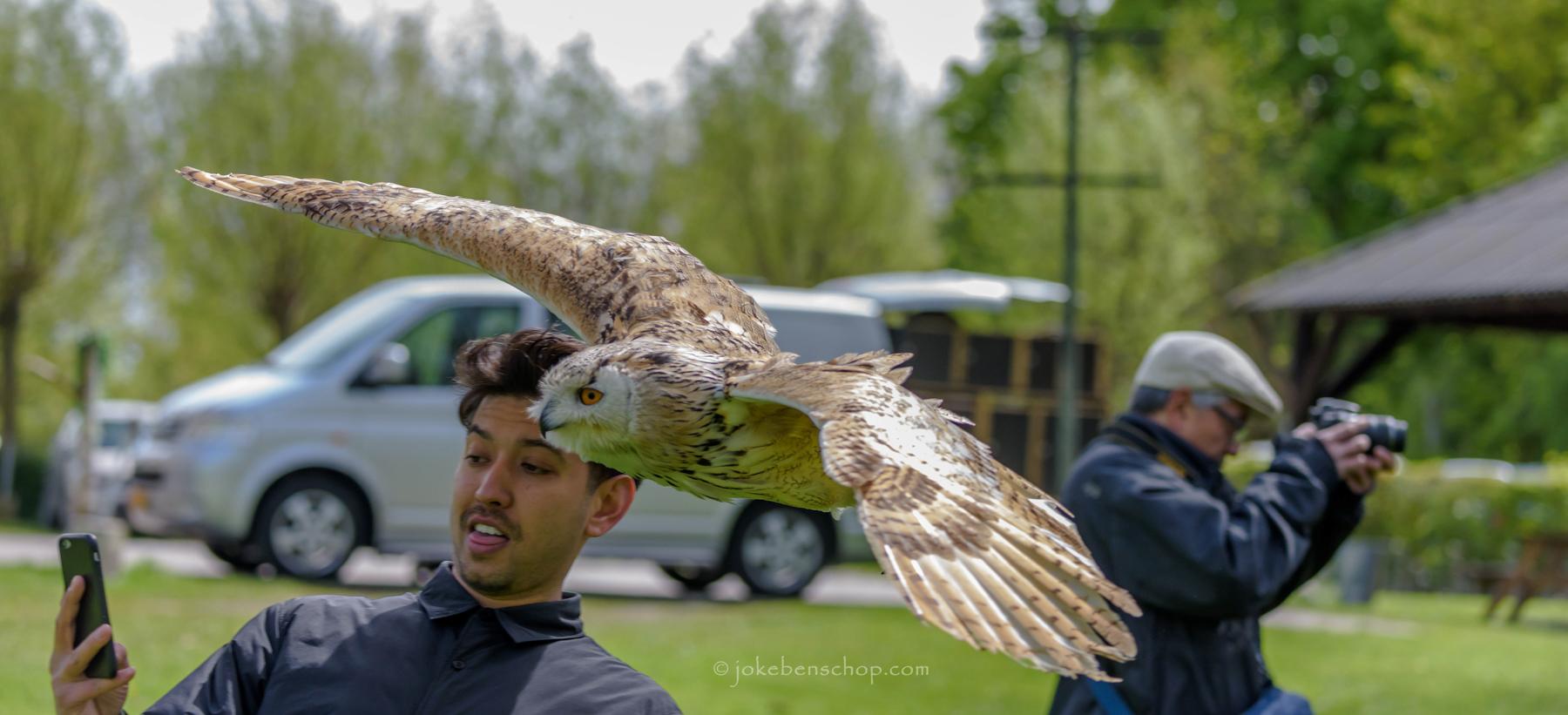 Siberische oehoe als vliegend model