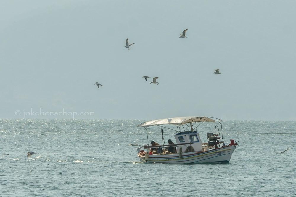 Meeuwen rond een vissersboot